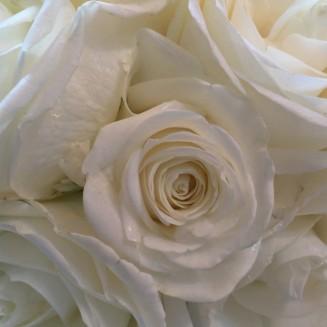 Akita Roses