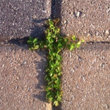 Clover- Taken outside of church in Naples Florida 2014